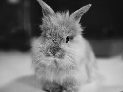Lovely Bunny Normal Desktop Backgrounds,Stills,Wallpapers