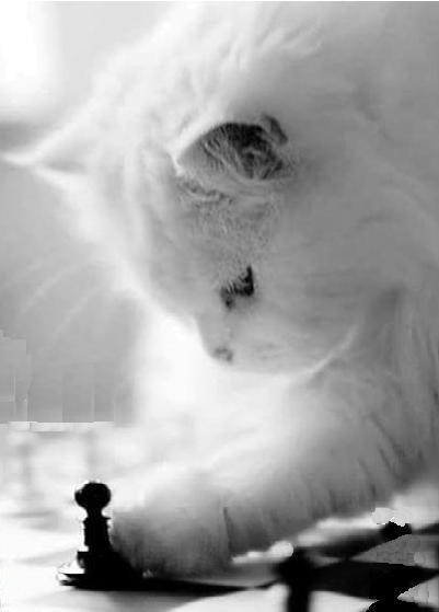 Gatito jugando al Ajedrez Jubilado