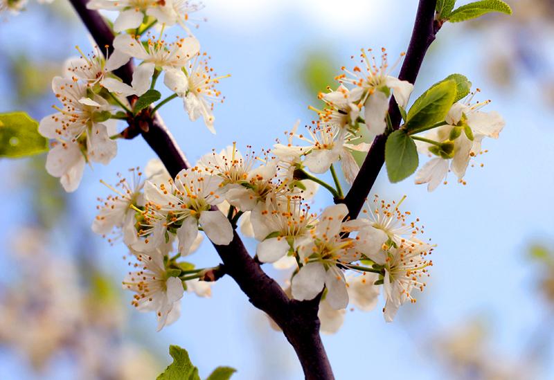 wiosna w ogrodzie kwitnace kwiaty drzewa