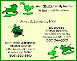 Dr Daniel J Levenson, DVM