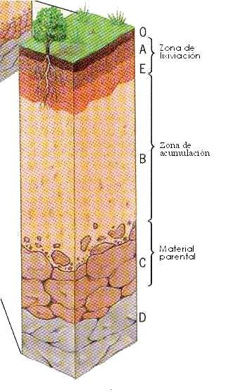 El suelo horizontes del suelo for Que elementos conforman el suelo