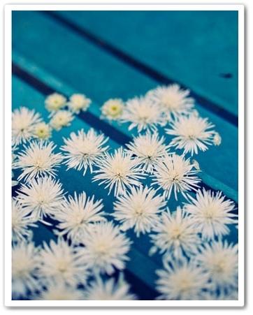 blommor pool,  flytande blommor,flowers pool, floating flowers