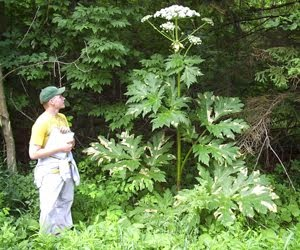 <b>Giant Hogweed Teaches Us about False Doctrine</b>