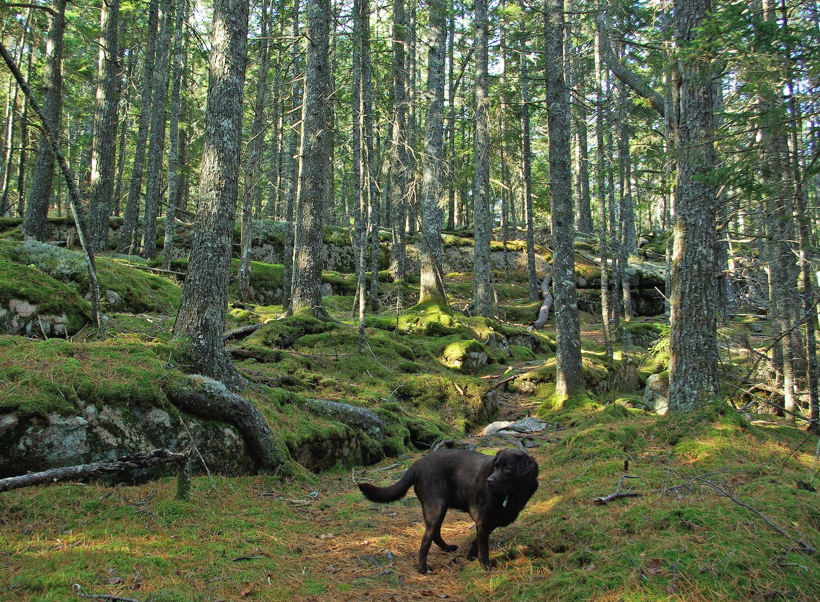 hiking near me allows dogs building materials bargain centerhiking near me allows dogs
