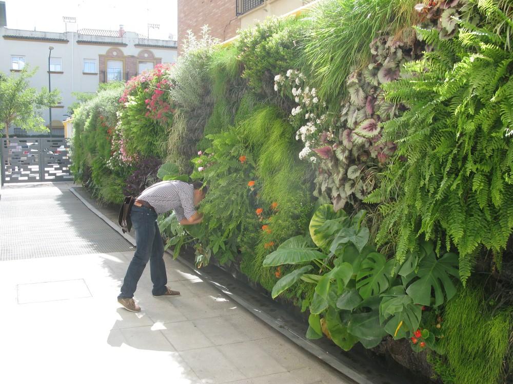 Enroque de ciencia primer jard n vertical hospitalario de for Como se hace un jardin vertical