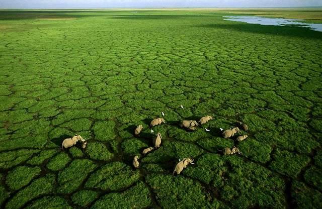 kumpulan gajah di Tasik Amboseli, Taman Negara Amboseli, Kenya