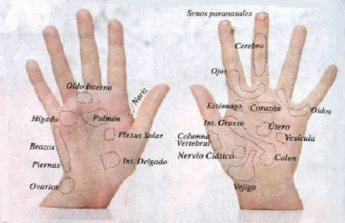 Reflexologia en manos
