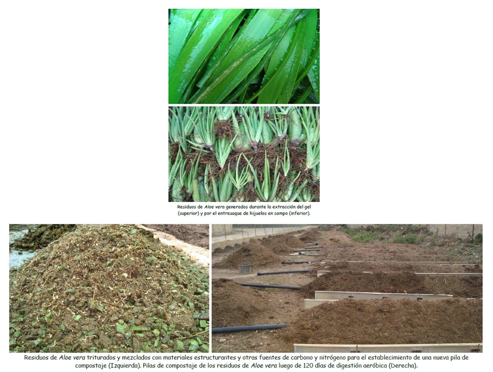 Aprovechamiento de los residuos agroindustriales de Aloe vera