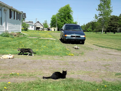 four outdoor cats