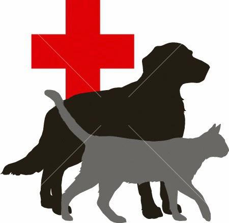 dokter hewan yogyakarta