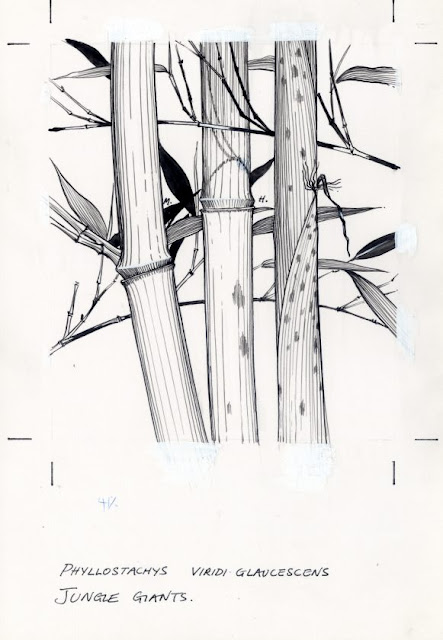 Bamboo Drawings