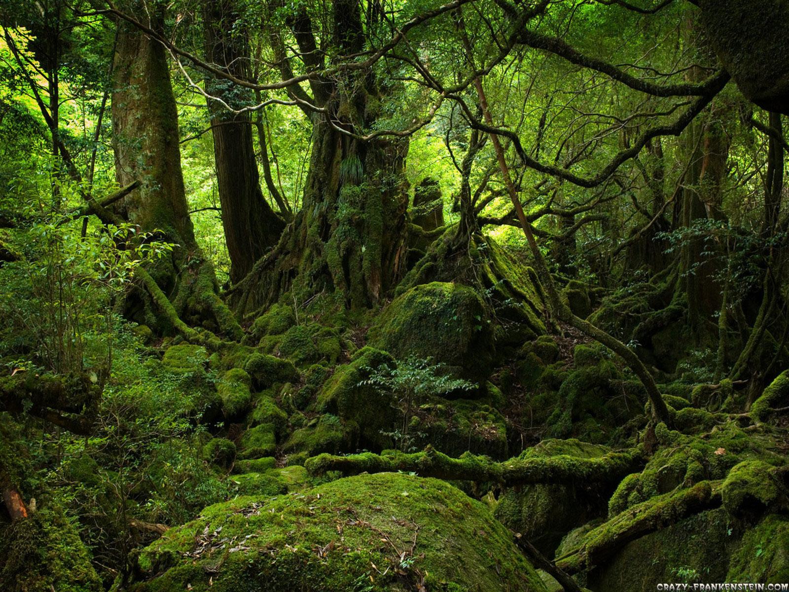 http://4.bp.blogspot.com/-JutctUUqhew/TlPkepIM14I/AAAAAAAAAwU/HpxOmgd3DQk/s1600/Forest%2BWallpaper-23.jpg
