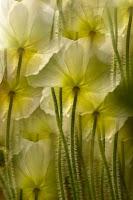 http://4.bp.blogspot.com/-Jv0R_6gWrP8/UfbsxynkqDI/AAAAAAAAAUc/IysSa7v9IME/s1600/flowers.jpg