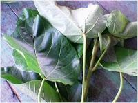 cara mengatasi cacingan, daun kluwek