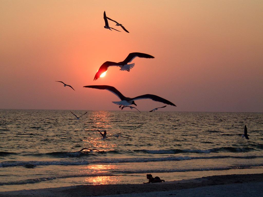 birds+at+sunset.jpg