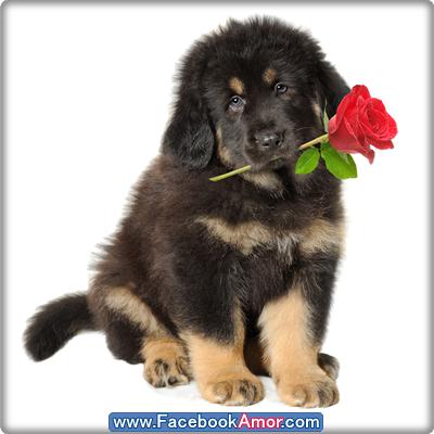 Frases con imagenes bonitas de rosas YouTube