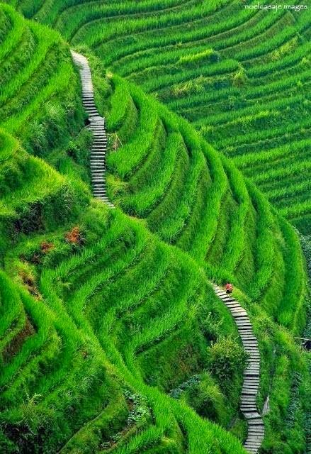 Lovely nature stunning nature for Terrace nature