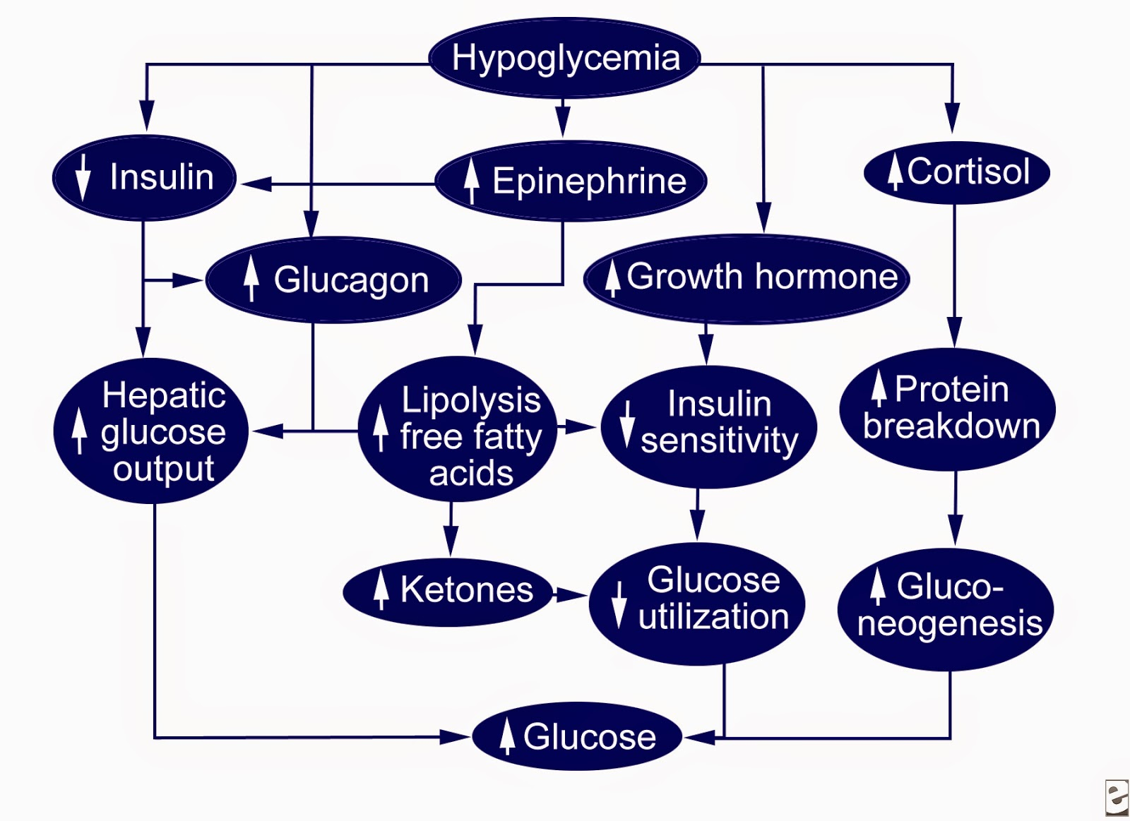 research paper hypoglycemia Research paper about hypoglycemia 26 may, 2018 research papers 0 there is no one specific cause of hypoglycemia, but there are several underlying factors that can contribute to.
