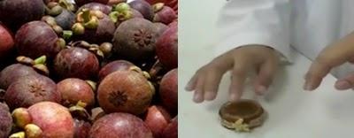 ekstrak kulit manggis