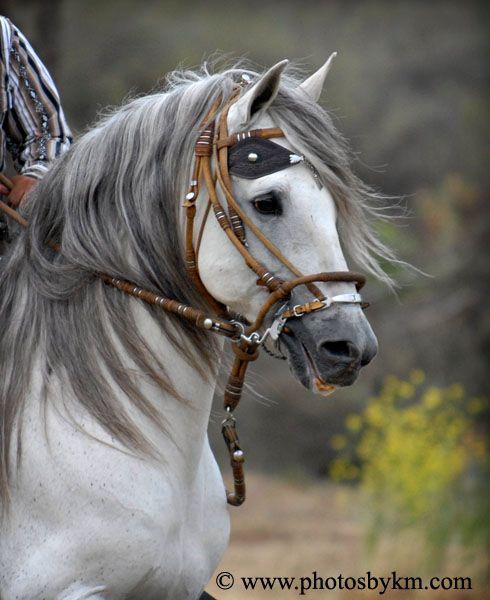 Fotos de caballos hermosos para facebook 34