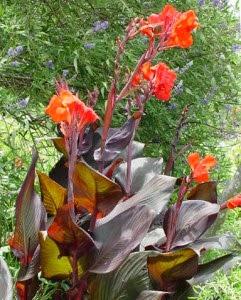 красивые цветники, клумбы, рабатки, солитеры