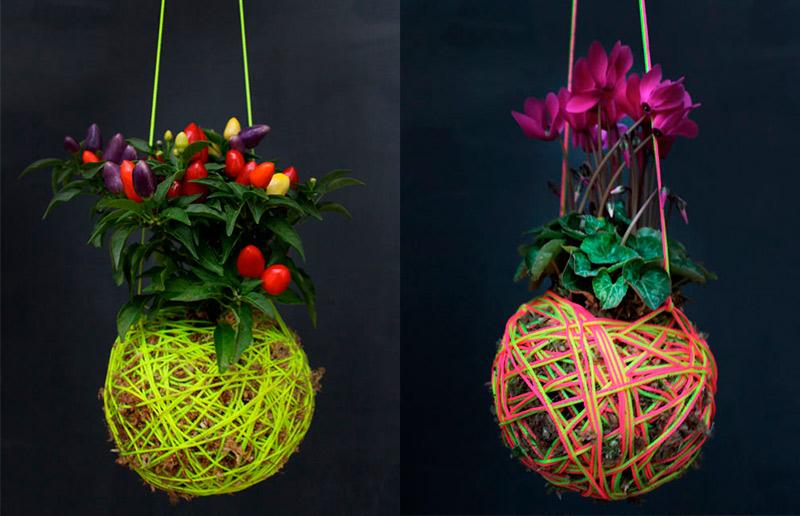 Kokedama: qual planta escolher