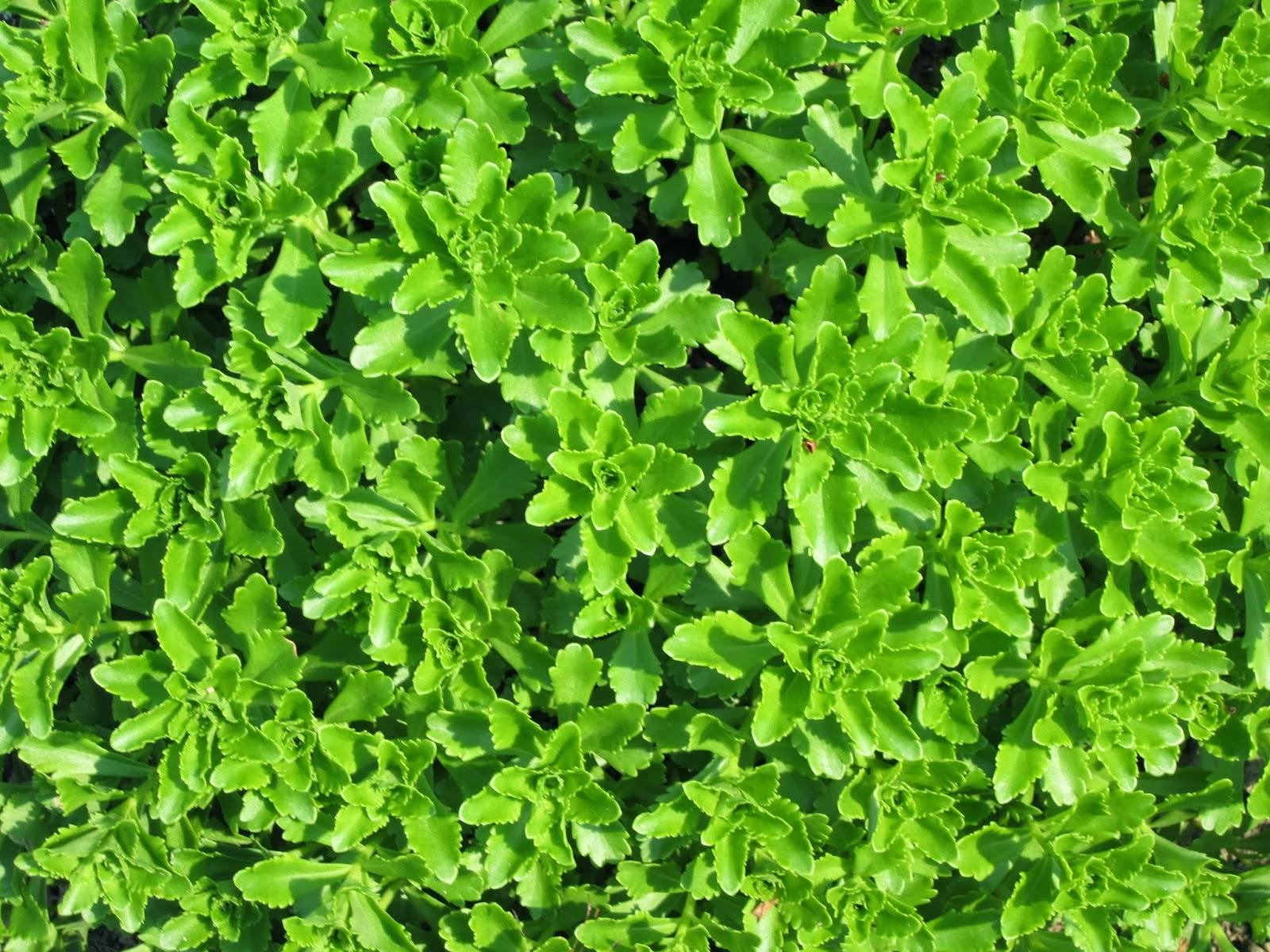 idrocultura nuova tendenza green