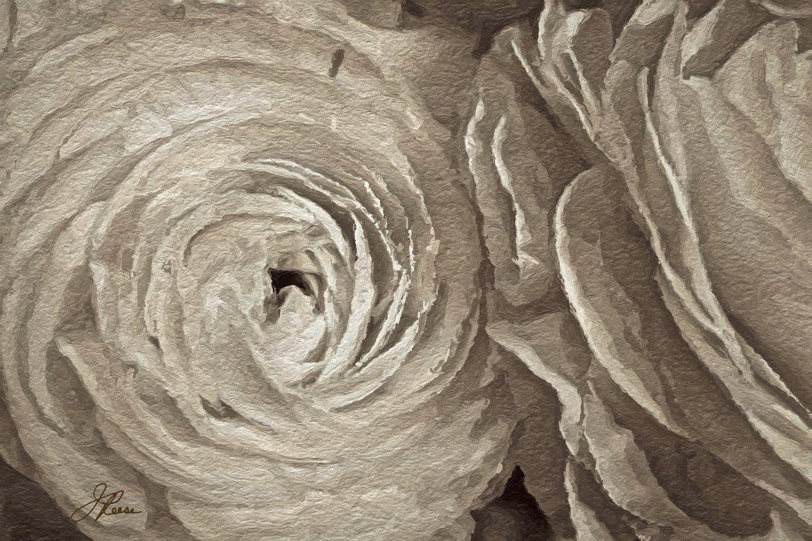 White on White Roses
