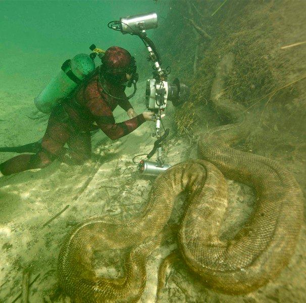 Giant underwater snake - photo#2