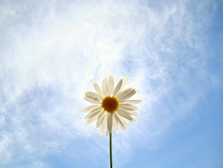 pessoa flores libertad poema