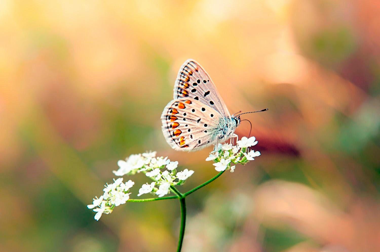 Im gene experience las mariposas m s hermosas del mundo - Imagenes de mariposas de colores ...