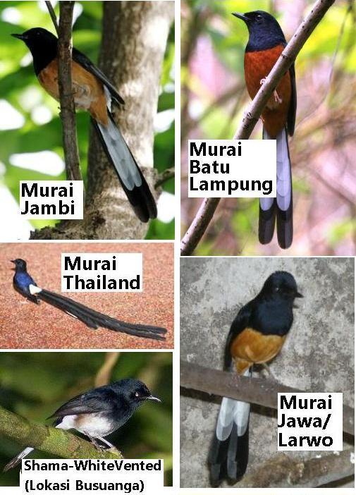 8 Cara Memancing Burung Walet Masuk Ke Rumah Buatan