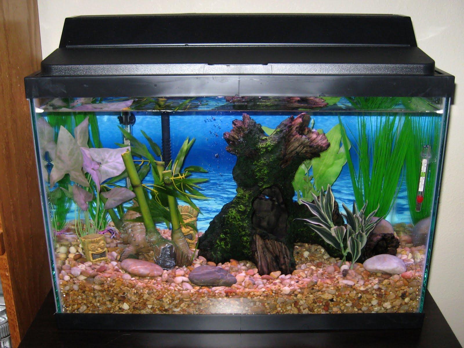 Fish tank setup ideas for Freshwater fish tank ideas