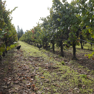 Donnelly Creek Vineyard
