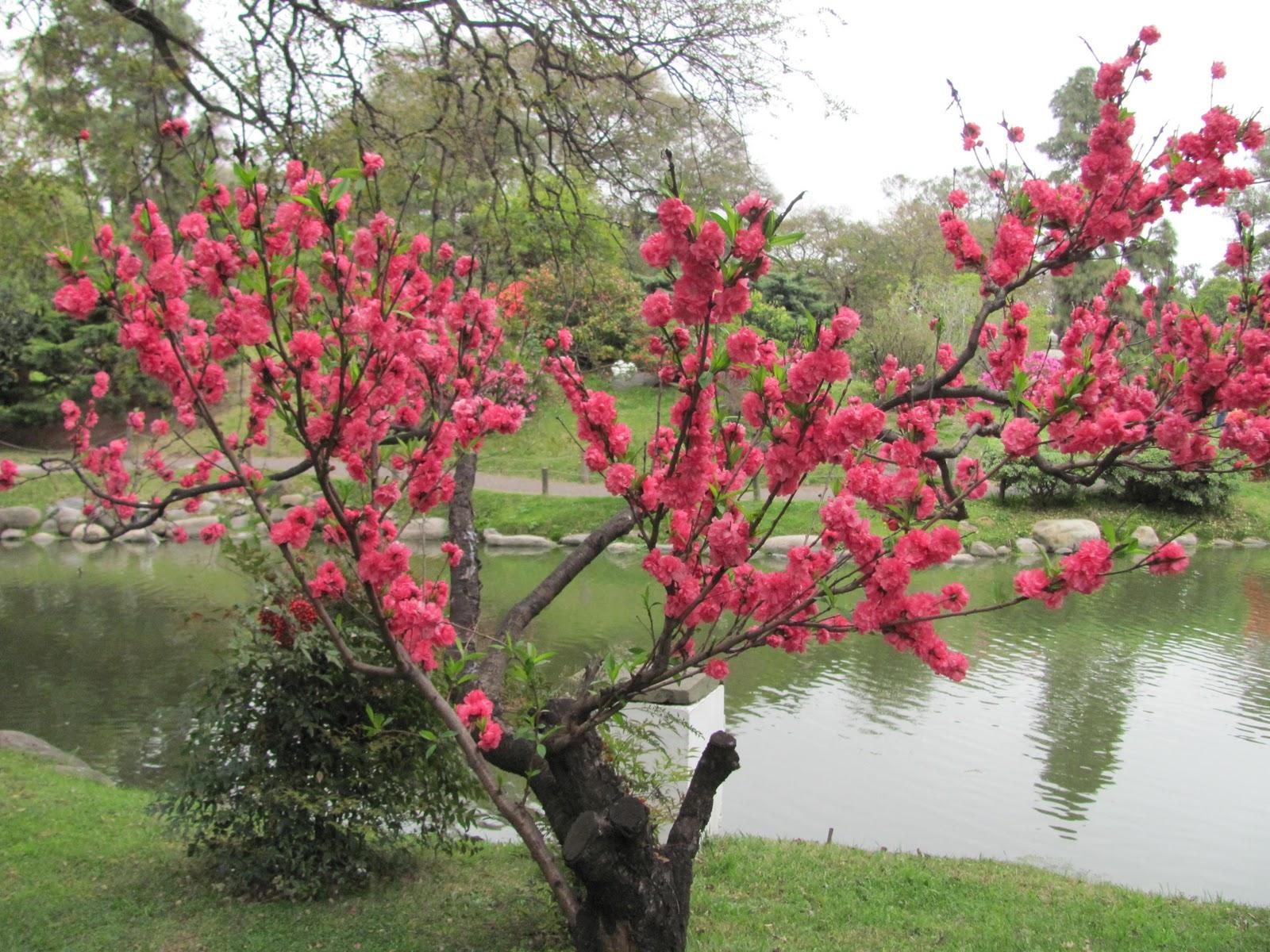 plantas para jardim japonesSimplesmente Fascinante Jardim Japonês