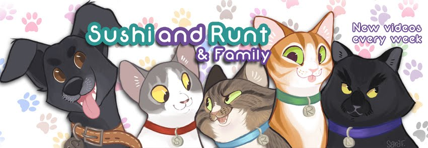 Sushi and Runt's Cat and Dog Blog !
