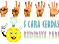 Cara Cerdas Budidaya Padi