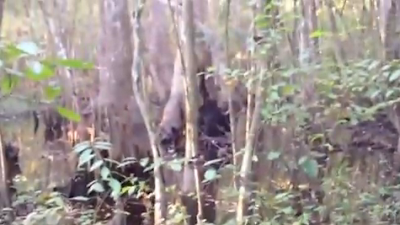 Mississippi Skunk Ape