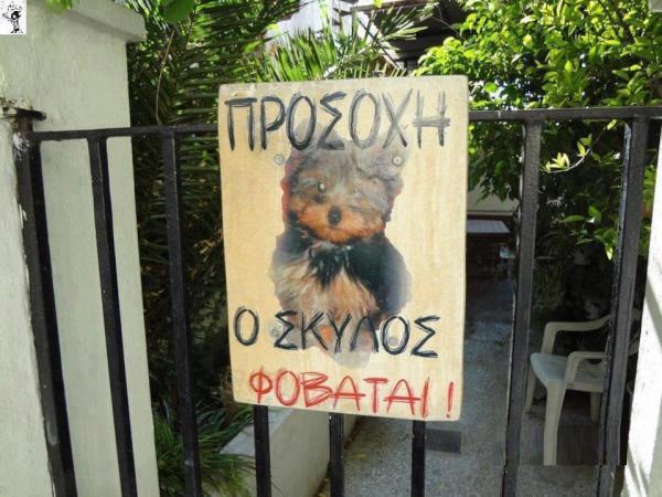 dog-σκυλος-σκυλάκι-προσοχή δαγκώνει-αστειες εικονες