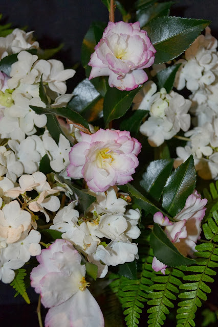 camellias, viburnum, fern, http://growingdays.blogspot.com