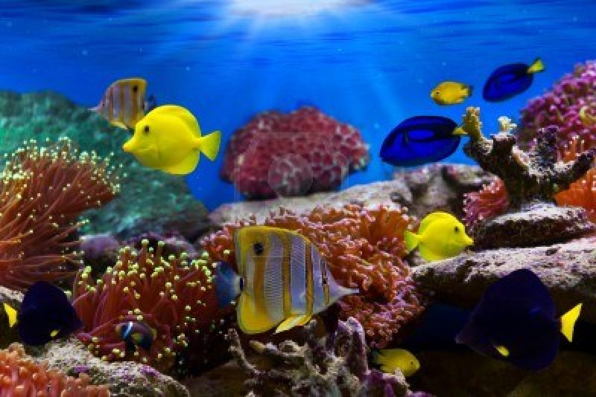 Splendour of waves gallery for Reef aquarium fish