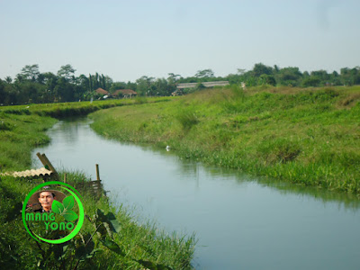 FOTO 2a - Sungai Ciasem sebelum dikeruk ... Lokasi di depan rumah Nenek admin