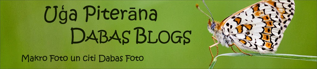 Uģa Piterāna dabas foto blogs