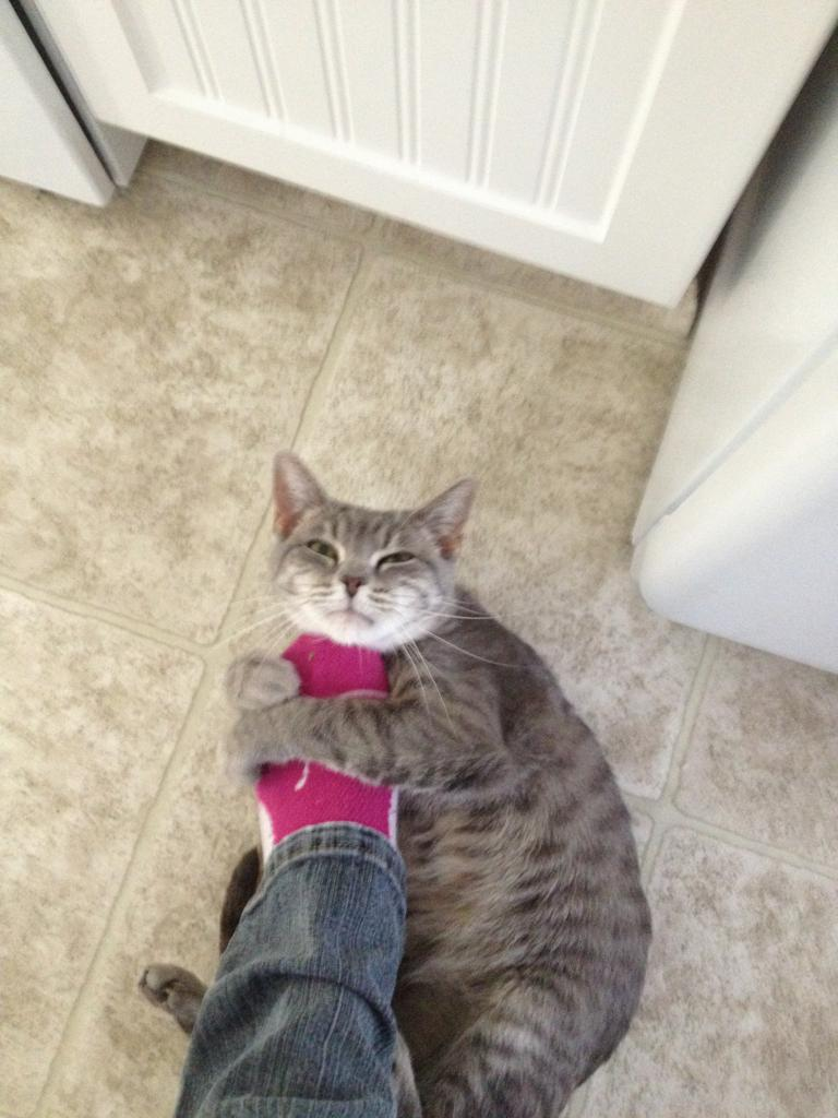 funny cat pictures, cat hugs human foot