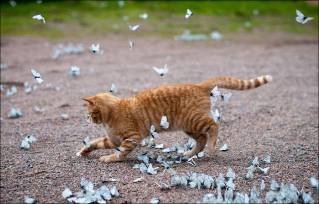 A cat playing with butterflies, cat and butterflies