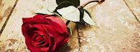 Ảnh bìa hình hoa hồng