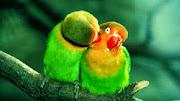 Green Parrots HD