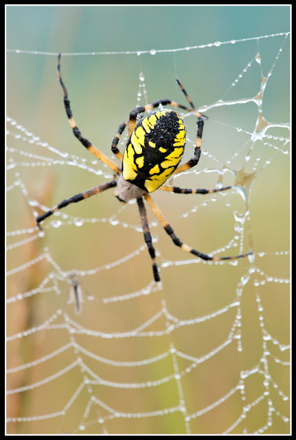 Nova Scotia; Soider; Web