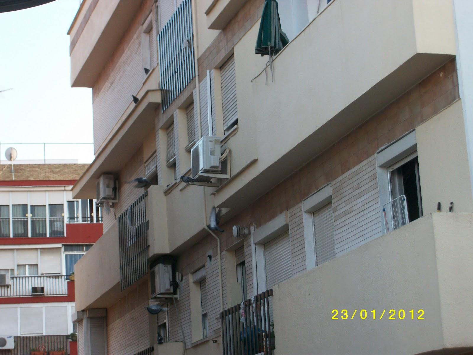 Plaga de palomas en la ciudad - Pinchos para palomas ...