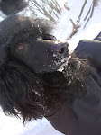 Я на Собаках Приморья